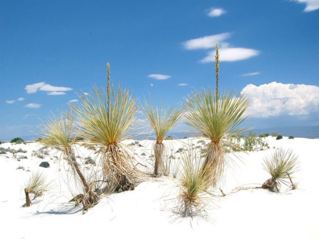 white_sands_national_park_8