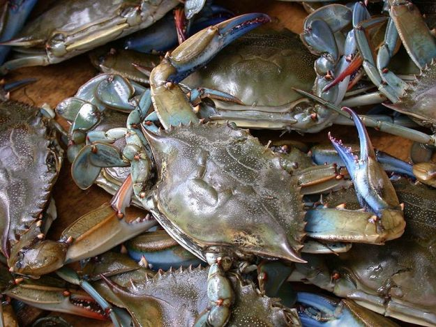 799px-Blue_crab_on_market_in_Piraeus_-_Callinectes_sapidus_Rathbun_20020819-317