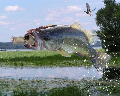 bassduck
