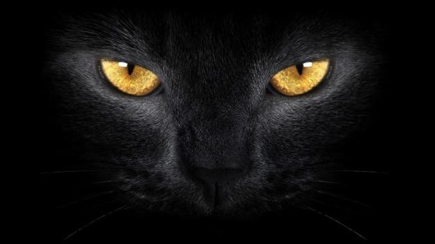 black-cat-eyes-2560x1440