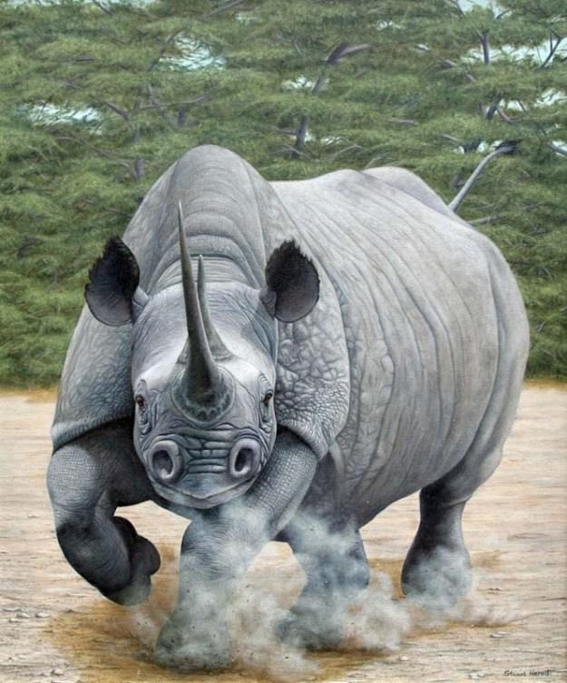 Charging-Rhino
