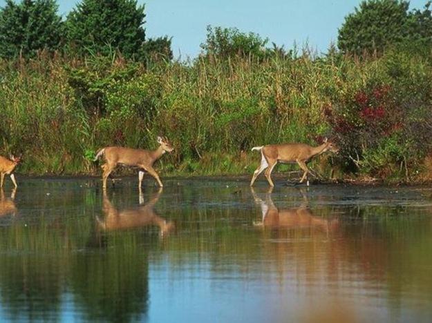 Deers-deer-3417195-635-466