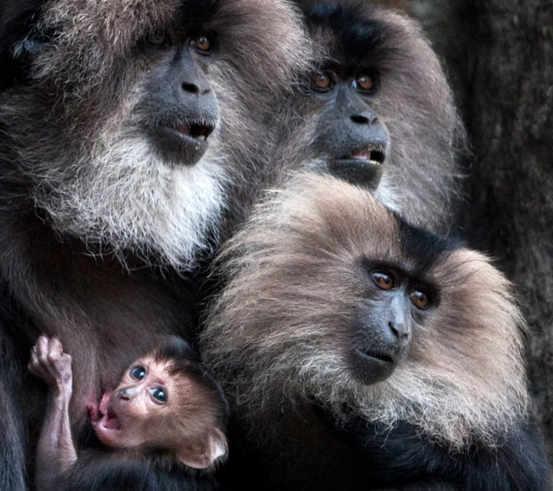 macaques-2481