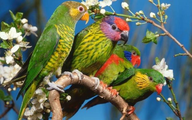 Parrots-Tree-1800x2880