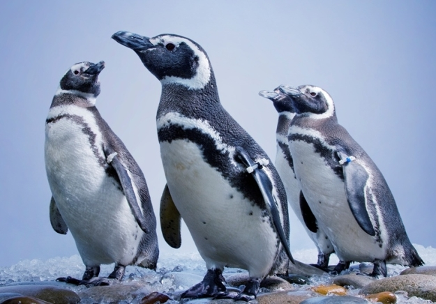 penguins_group-770x538