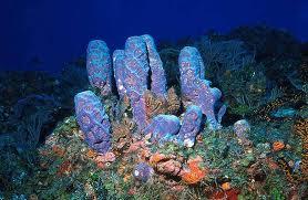 sponge purple tube