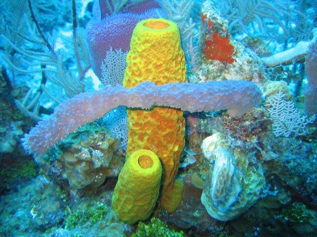 sponge saltwater