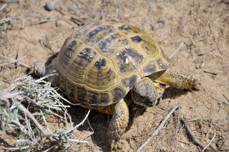 tortoise uzbekistan
