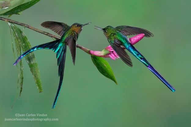 Nature photography by Juan Carlos Vindas