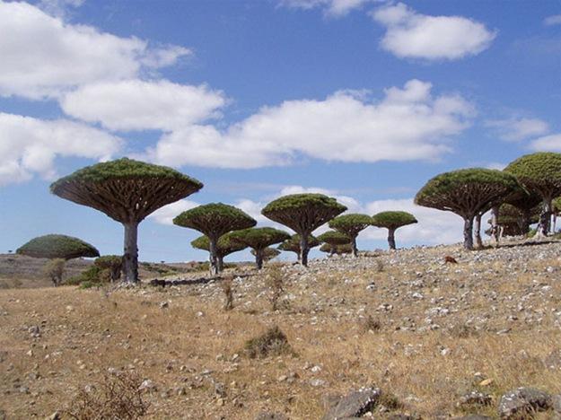 1.Socotra-Island-Yemen