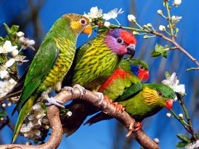 colorful on tree parrots hd wallpaper