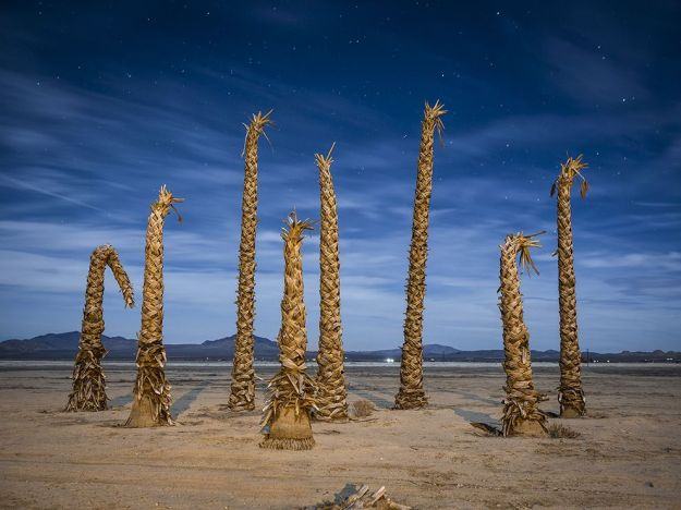 desert-palms-california_77419_990x742