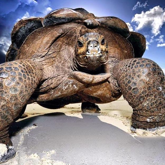 giant-tortoise_galapagos