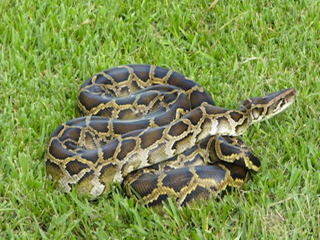 Glades-Python