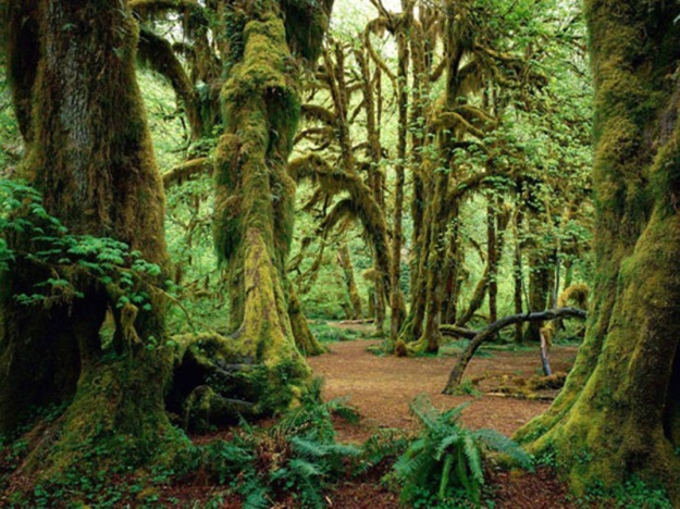 Hall-of-Mosses-Olympic-National-Park-Washington