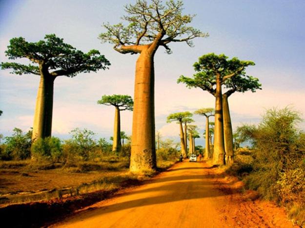 Morondava-Madagascar