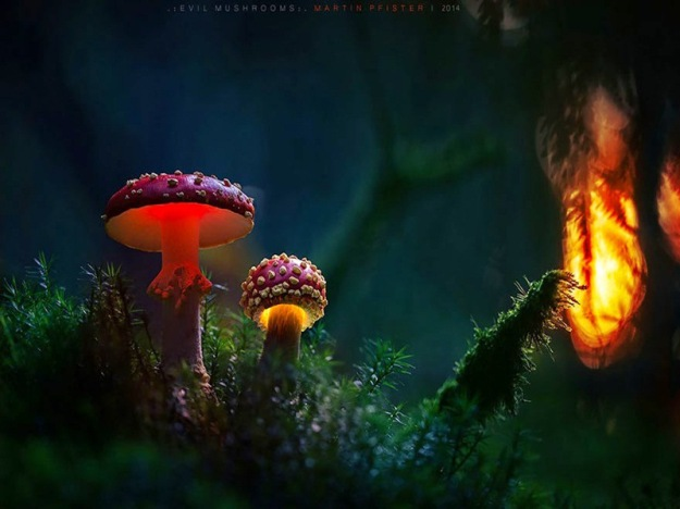 mushrooms-martin-pfister-13