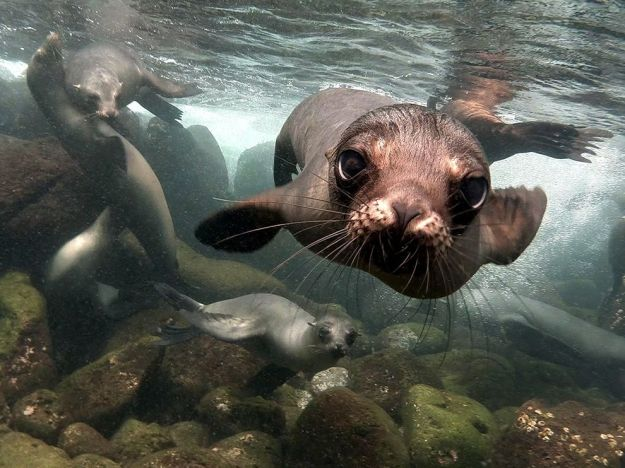 sea-lions-galapagos-islands_82060_990x742