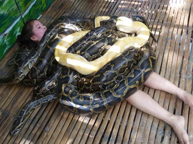 snakes_massage_philippines_cebu_city_zoo_pythons-380037