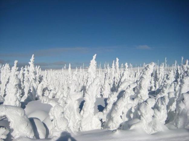 Snow-Photos-4