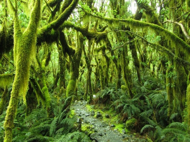 Take-a-closer-look-at-this-forest-placed-along-the-Milford-Track