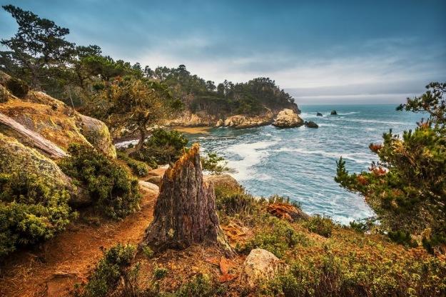 Travel_Photography_Blog_California_Tree_Stub_at_Cypress_Cove_Point_Lobos