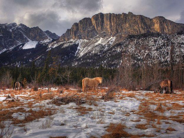 wild-horses-yamnuska-canada_79800_990x742