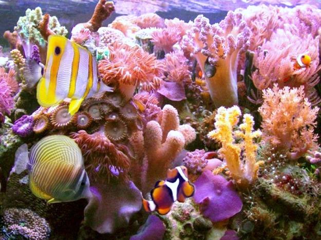 1357318175_0!!-!!Hikkaduwa coral reef