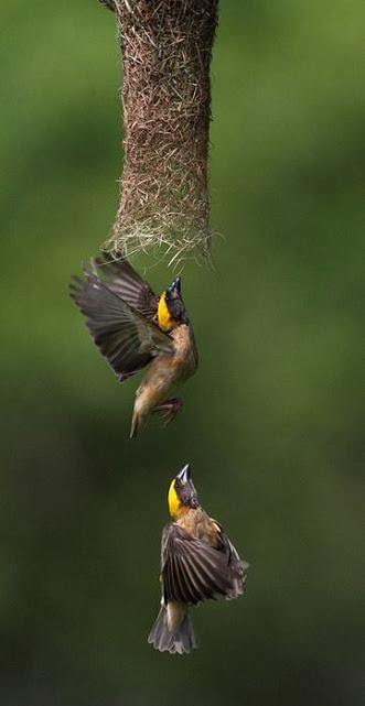 amazing nest!