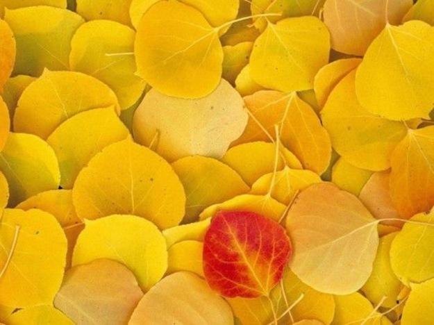 beautiful-autumn-pictures-01