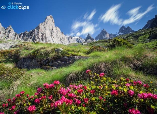 Paesaggi-Valmasino_ValTorroneRododendri+PiccoLuigiAmedeo152266