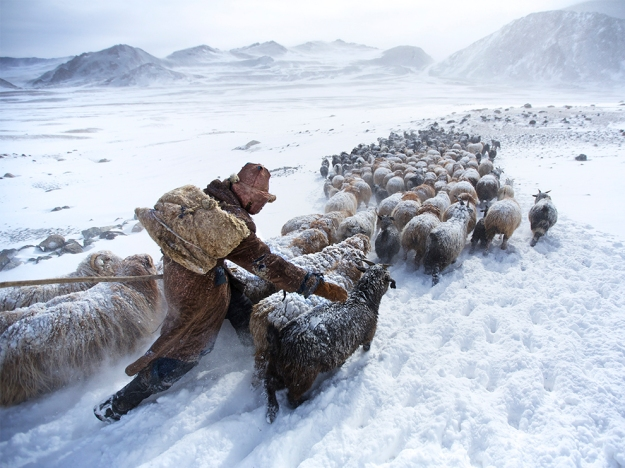 Kazakh-Mongolian nomad searching for graze in the Altai Mountains, Mongolia.