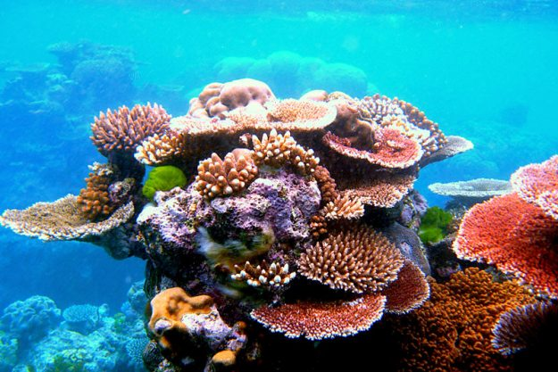travel-footprint-hikkaduwa-coral-reef