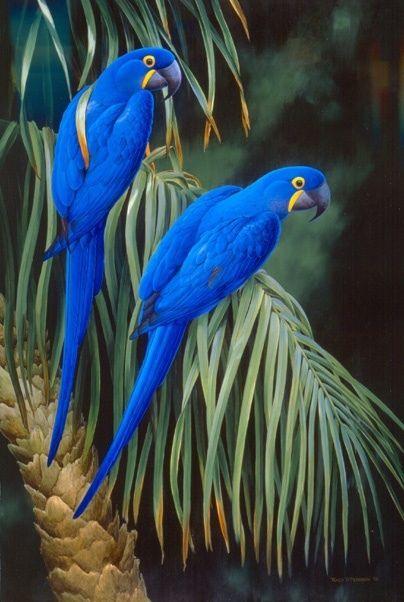 10 macaws