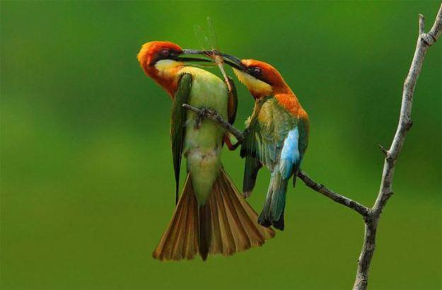 colorful-wildlife-photography_sompob-sasismit1