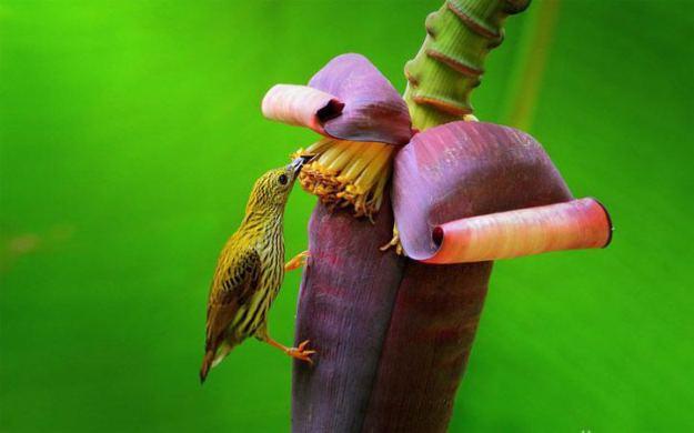 colorful-wildlife-photography_sompob-sasismit8