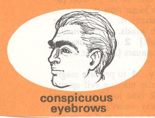 conspicuous eyebrows2
