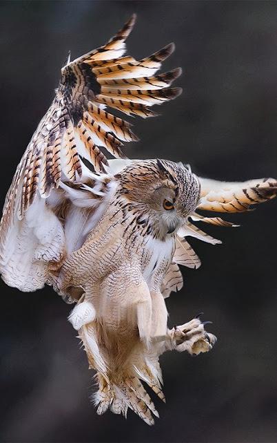 NN AZ  BIRD 68b23e