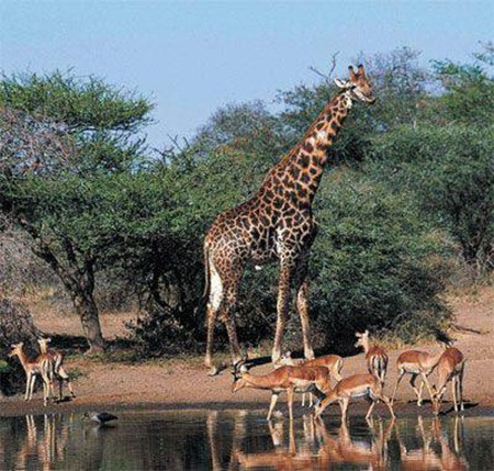 NO.3-Great-Limpopo-Transfrontier-Park_thumb2