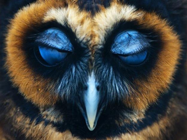 owl-photography-27__880-640x454