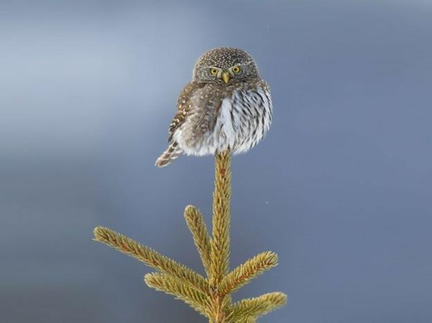 owl-photography-32__880-640x541