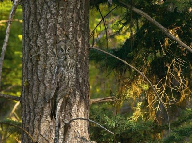 owl-photography-35__880-640x425