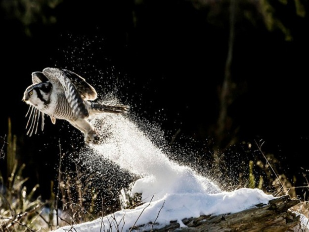owl-photography-4__880-640x426