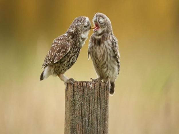 owl-photography-8__880-640x301