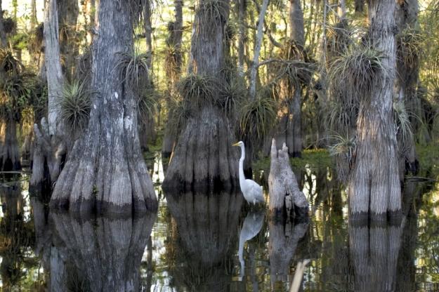 Everglades National Park_23