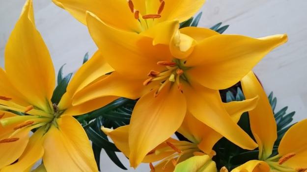 Lilie gelb