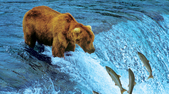 alaska-inside-passage-cruise-wildlife