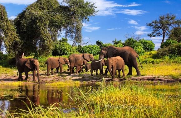 elephants-e1358970311892