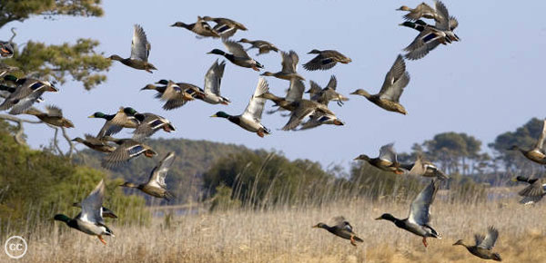 tck-wildlife-conservation-feature3