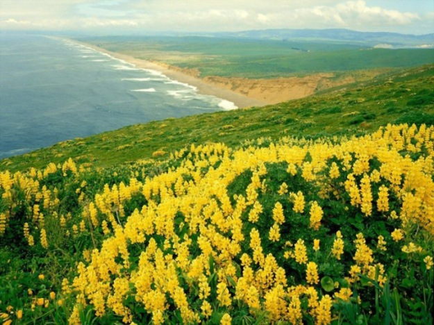 15-Most-Beautiful-Landscapes-Point-Reyes-National-Seashore-13